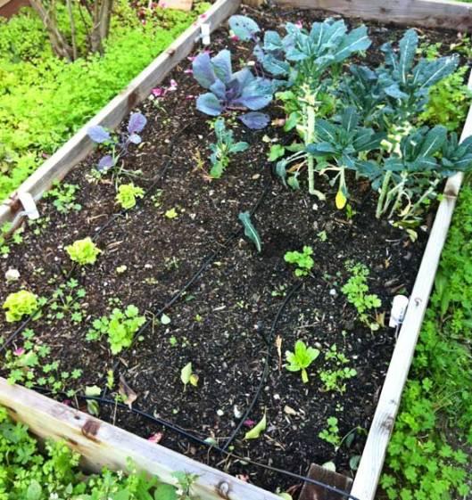 raised-garden