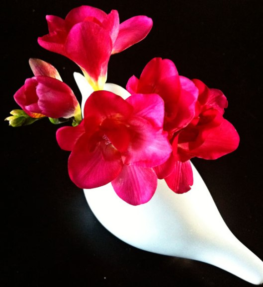 daffodils7