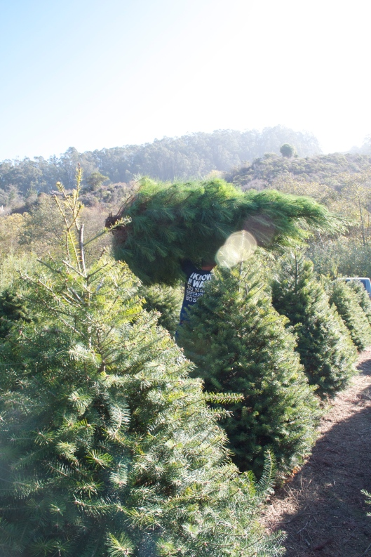 Christmas tree carrying
