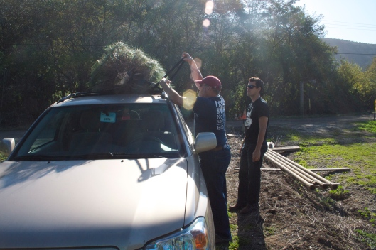 Christmas tree on the car